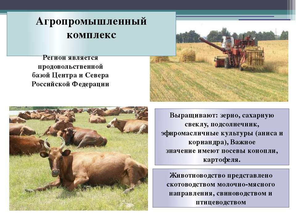 Агропромышленный комплекс Регион является продовольственной базой Центра и Се...