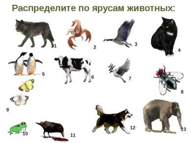 Распределите по ярусам животных: 1 2 3 4 5 6 7 8 9 10 11 12 13