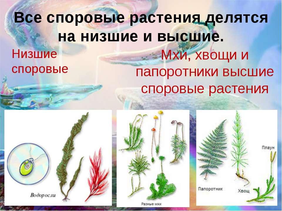 Все споровые растения делятся на низшие и высшие. Низшие споровые Мхи, хвощи ...
