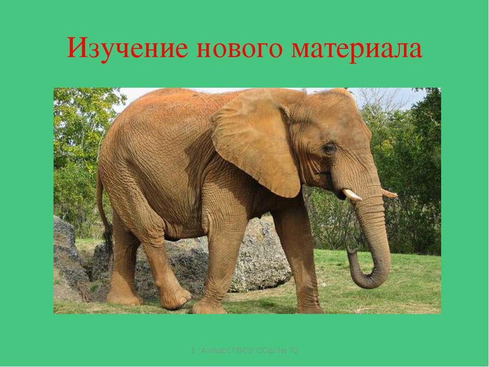 Изучение нового материала У этого зверя огромный рост, Сзади у зверя – малень...