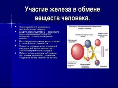 Участие железа в обмене веществ человека. Железо участвует в окислительно-вос...