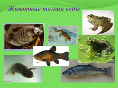 Животные толщи воды