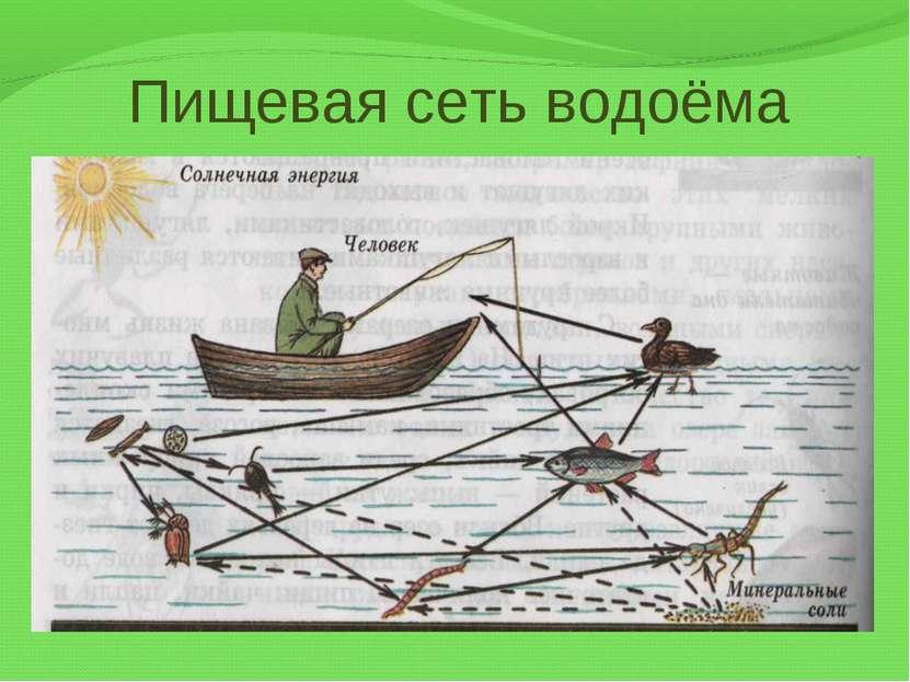 Пищевая сеть водоёма