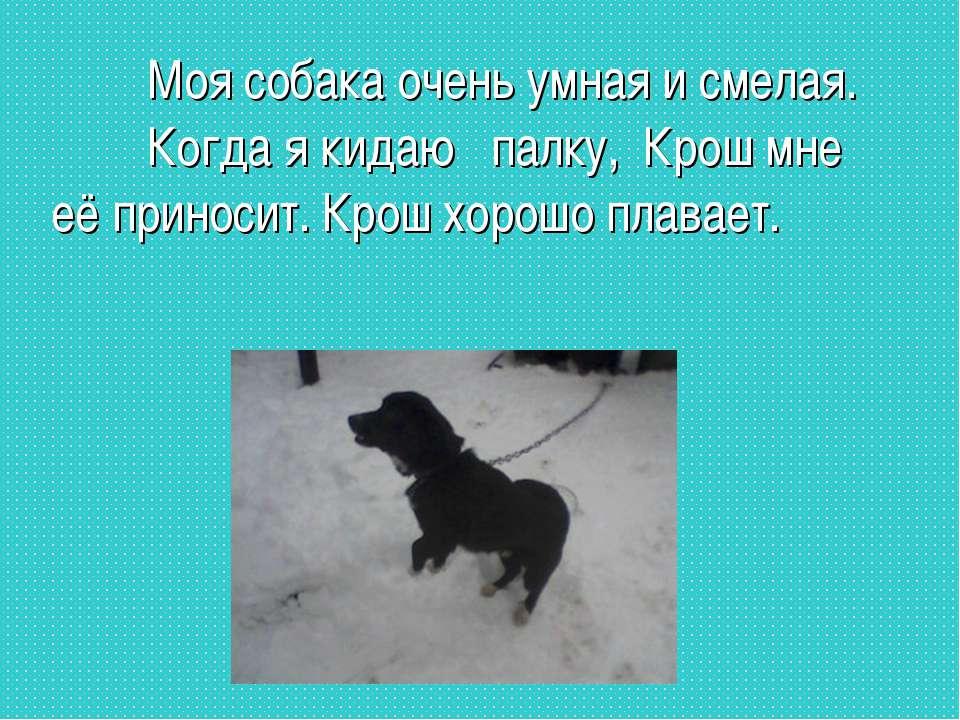 Моя собака очень умная и смелая. Когда я кидаю палку, Крош мне её приносит. К...