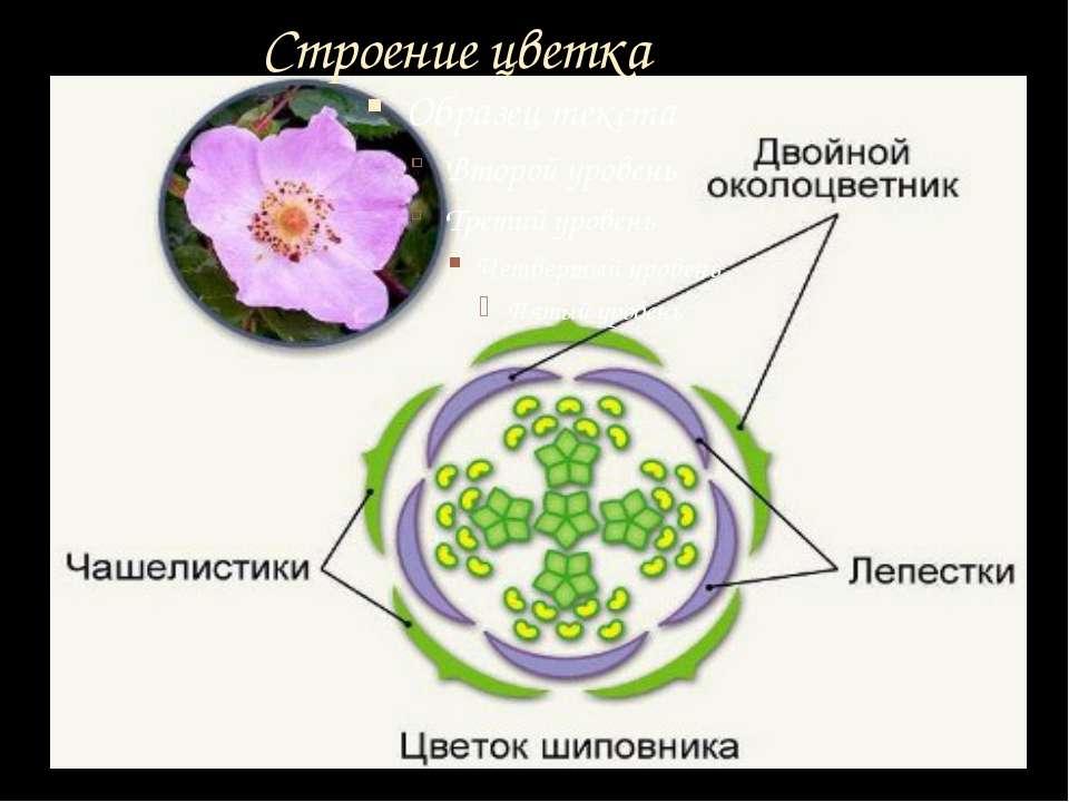 Необычные цветковые растения