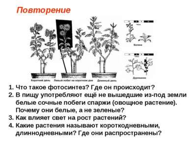 Что такое фотосинтез? Где он происходит? В пищу употребляют ещё не вышедшие и...