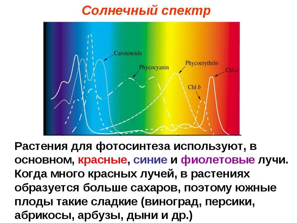 Солнечный спектр Растения для фотосинтеза используют, в основном, красные, си...