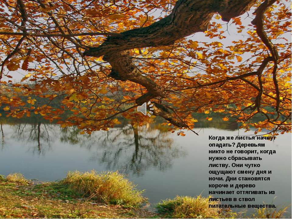 Когда же листья начнут опадать? Деревьям никто не говорит, когда нужно сбрасы...