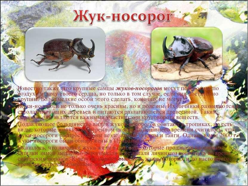 Известно также, что крупные самцы жуков-носорогов могут переносить по воздуху...
