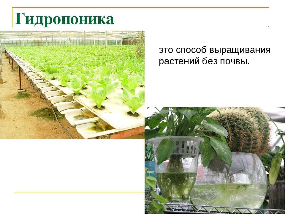 Метод выращивания растений по