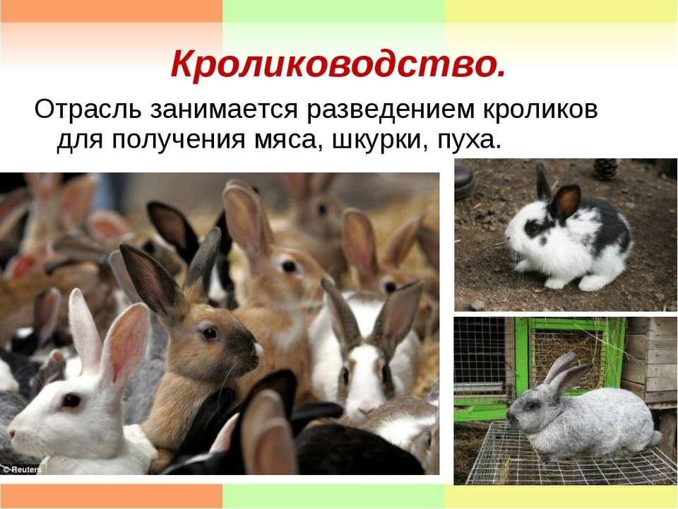 Кролиководство. Отрасль занимается разведением кроликов для получения мяса, ш...