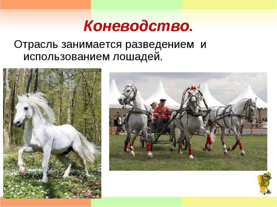 Коневодство. Отрасль занимается разведением и использованием лошадей.