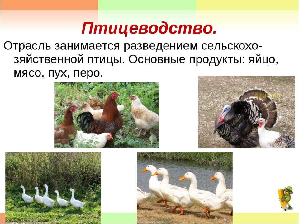 Птицеводство. Отрасль занимается разведением сельскохо- зяйственной птицы. Ос...