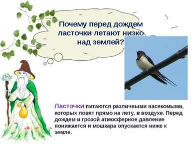 Почему перед дождем ласточки летают низко над землей? Ласточки питаются разли...