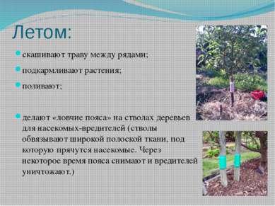 Летом: скашивают траву между рядами; подкармливают растения; поливают; делают...