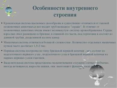 Особенности внутреннего строения Кровеносная система насекомых своеобразна и ...