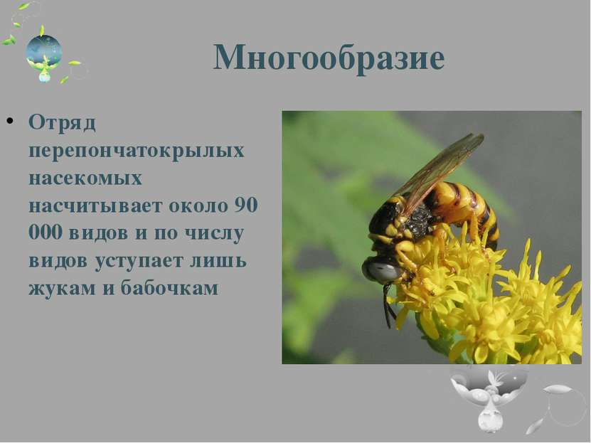 Многообразие Отряд перепончатокрылых насекомых насчитывает около 90 000 видов...