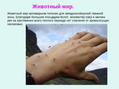 Животный мир заповедника типичен для западносибирской таежной зоны. Благодаря...