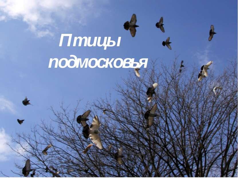 Птицы подмосковья
