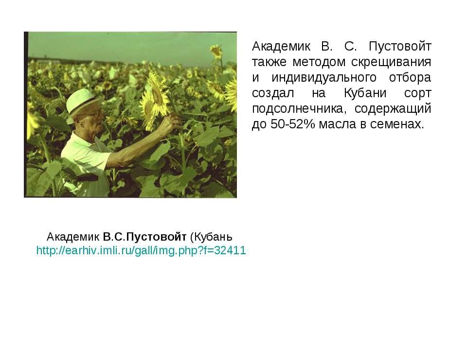 Академик В. С. Пустовойт также методом скрещивания и индивидуального отбора с...