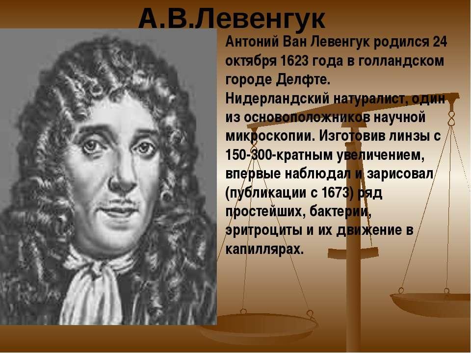А.В.Левенгук Антоний Ван Левенгук родился 24 октября 1623 года в голландском ...