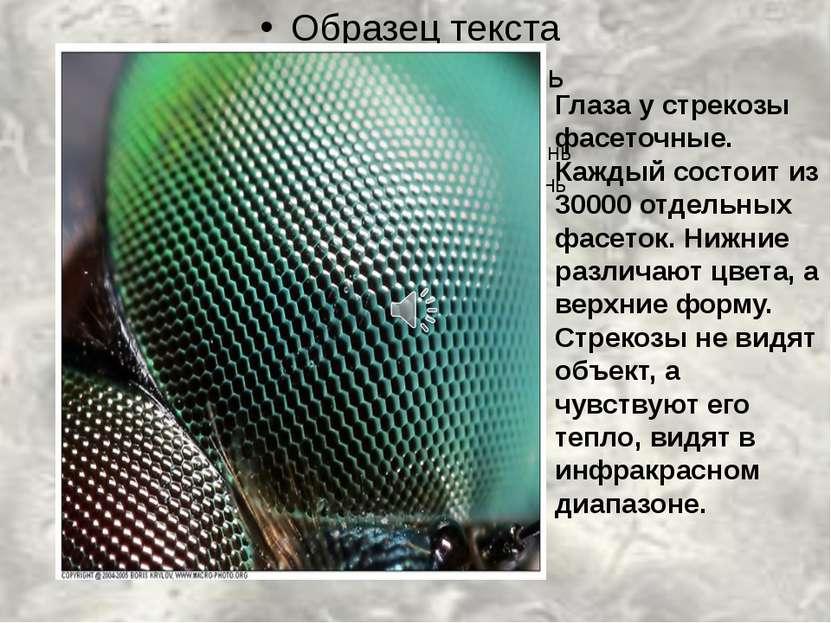 Глаза у стрекозы фасеточные. Каждый состоит из 30000 отдельных фасеток. Нижни...