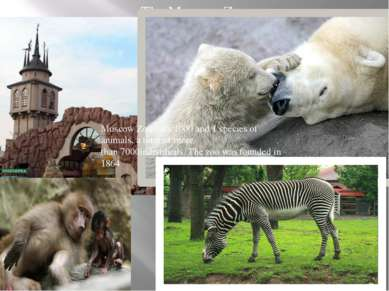 The Moscow Zoo Moscow Zoo - it's 1000 and 1 species of animals, a total of mo...