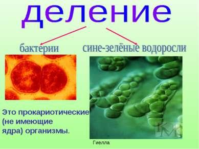 Гиелла Это прокариотические (не имеющие ядра) организмы.