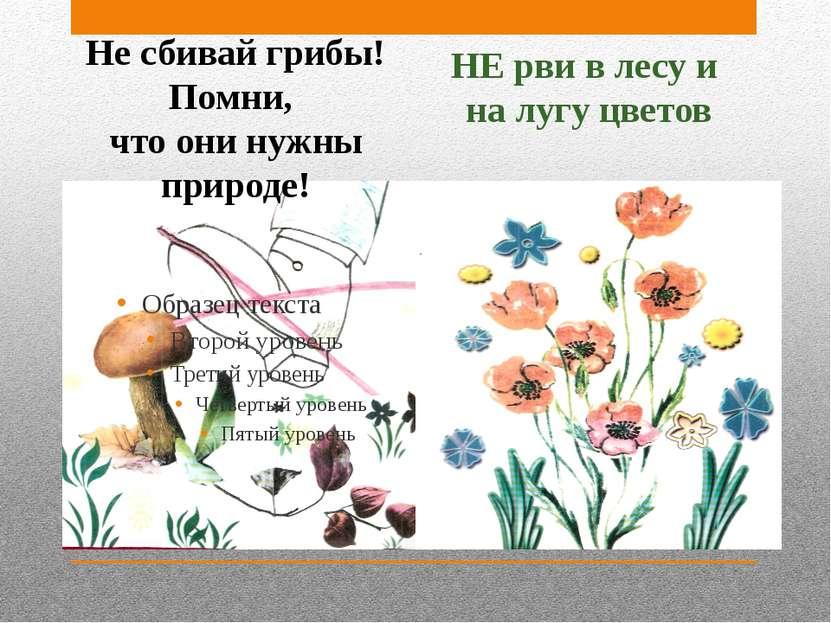 Не сбивай грибы! Помни, что они нужны природе! НЕ рви в лесу и на лугу цветов
