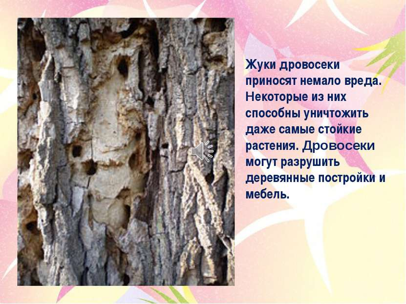 Жуки дровосеки приносят немало вреда. Некоторые из них способны уничтожить да...