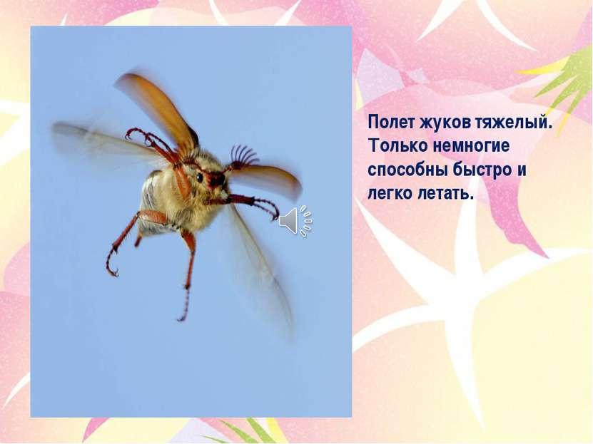 Полет жуков тяжелый. Только немногие способны быстро и легко летать.