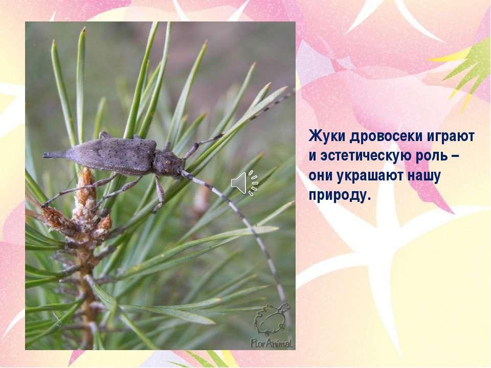 Жуки дровосеки играют и эстетическую роль – они украшают нашу природу.