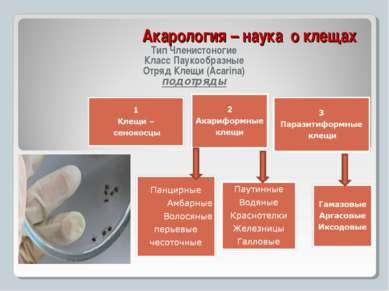 Акарология – наука о клещах Тип Членистоногие Класс Паукообразные Отряд Клещи...