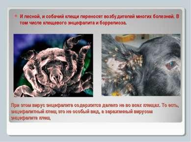 При этом вирус энцефалита содержится далеко не во всех клещах. То есть, энцеф...