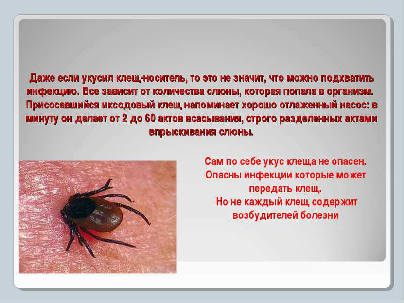 Даже если укусил клещ-носитель, то это не значит, что можно подхватить инфекц...