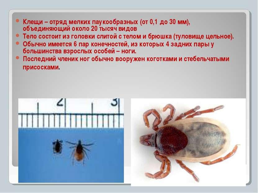 Клещи – отряд мелких паукообразных (от 0,1 до 30 мм), объединяющий около 20 т...