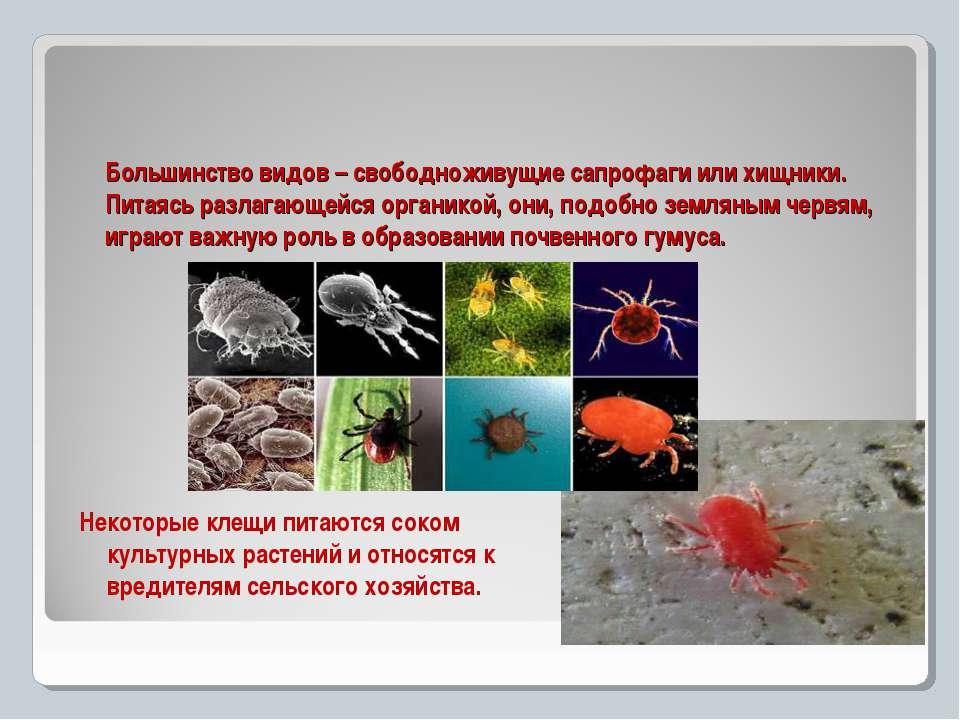 Большинство видов – свободноживущие сапрофаги или хищники. Питаясь разлагающе...