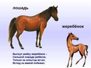Выгнул шейку жеребёнок – Сильной лошади ребёнок, Только на копытца встал, Всл...