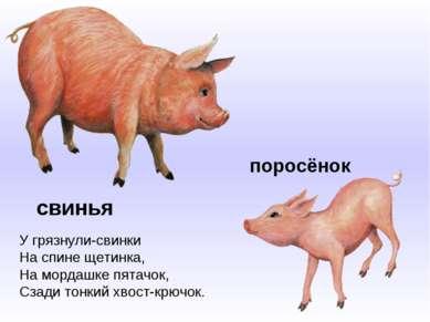 свинья У грязнули-свинки На спине щетинка, На мордашке пятачок, Сзади тонкий ...