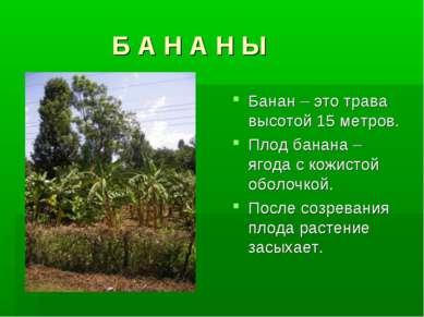 Б А Н А Н Ы Банан – это трава высотой 15 метров. Плод банана – ягода с кожист...