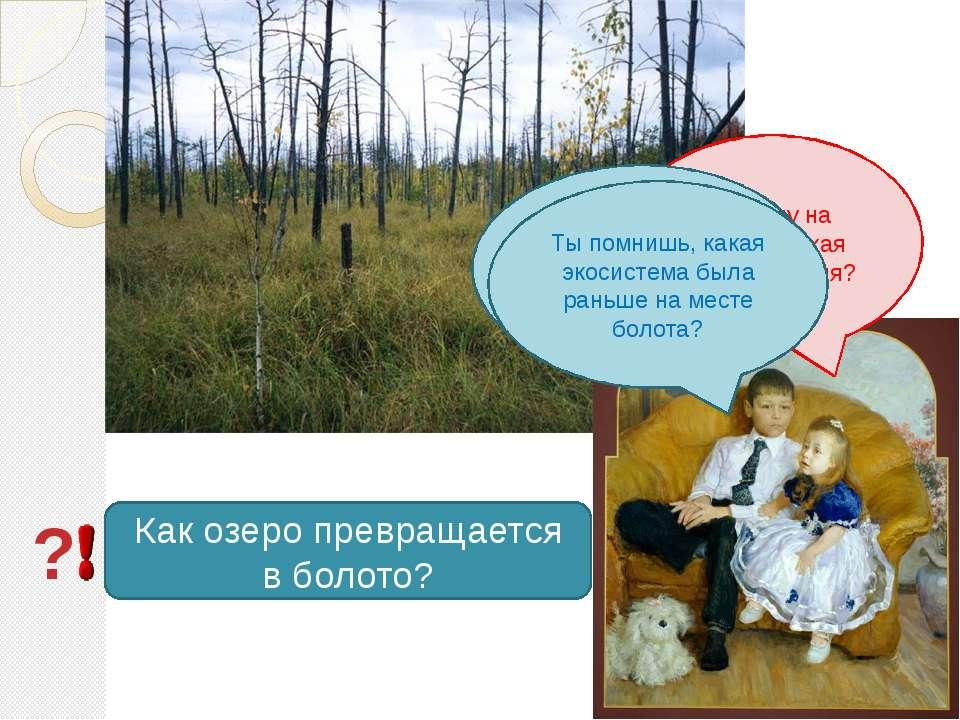 Почему на болоте такая зыбкая земля? Потому что под толстым слоем растений бо...
