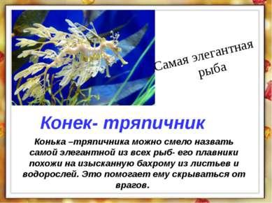 Конька –тряпичника можно смело назвать самой элегантной из всех рыб- его плав...