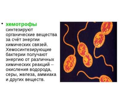 хемотрофы синтезируют органические вещества за счёт энергии химических связей...