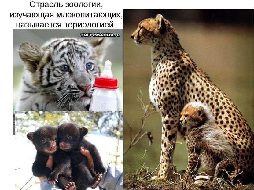 Отрасль зоологии, изучающая млекопитающих, называется териологией.