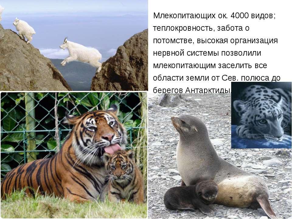 Млекопитающих ок. 4000 видов; теплокровность, забота о потомстве, высокая орг...