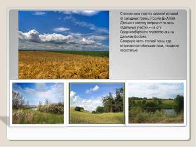 Степная зона тянется широкой полосой от западных границ России до Алтая. Даль...