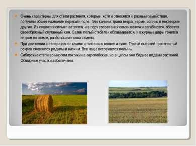 Очень характерны для степи растения, которые, хотя и относятся к разным семей...