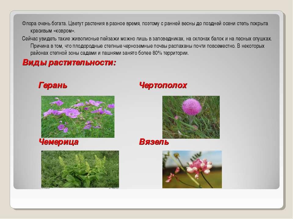 Какие цветы цветут весной и летом