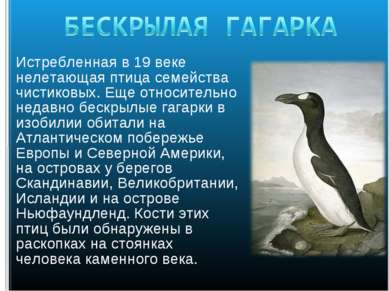Истребленная в 19 веке нелетающая птица семейства чистиковых. Еще относительн...