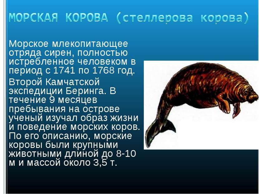 Морское млекопитающее отряда сирен, полностью истребленное человеком в период...